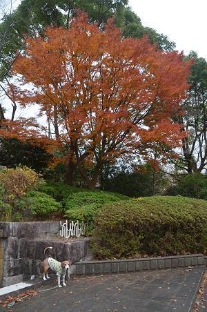 20171201丸山公園04