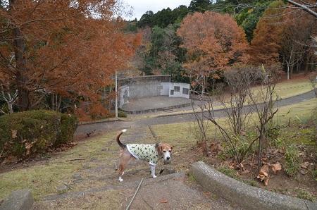 20171201丸山公園12