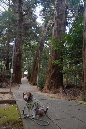 20171201日吉神社18