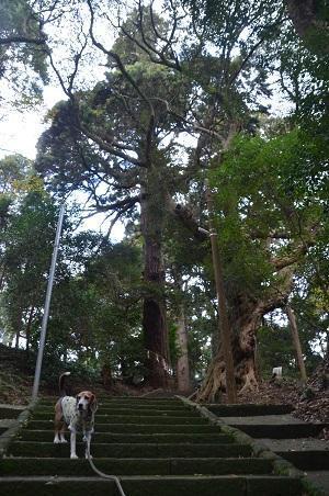 20171201日吉神社16