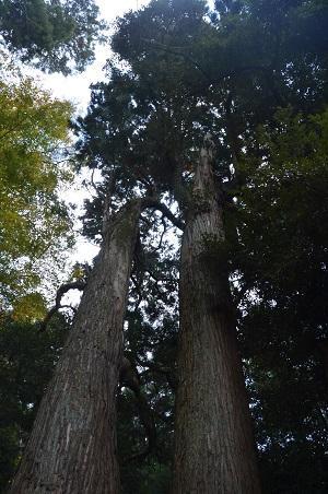 20171201日吉神社13