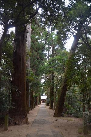 20171201日吉神社19