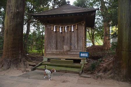 20171201日吉神社34