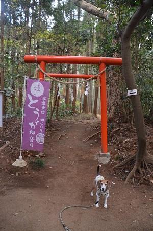 20171201日吉神社39