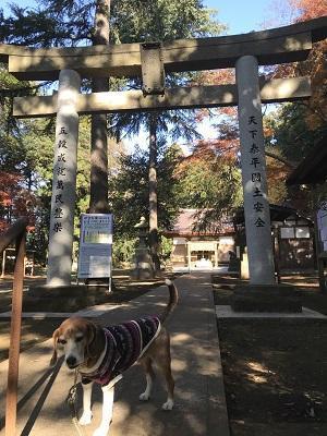 20171207蛟蝄神社11