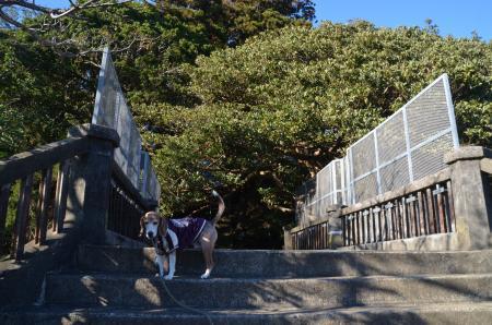 20171209猿田神社05