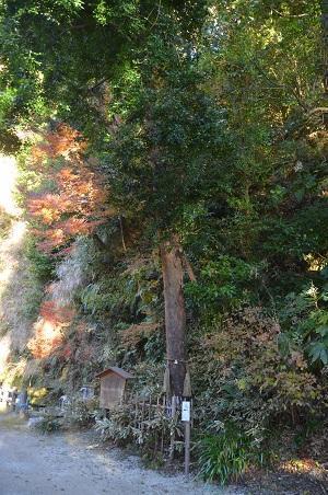20171214高瀧神社21