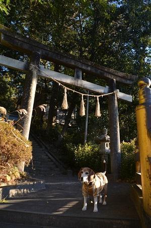 20171214高瀧神社25