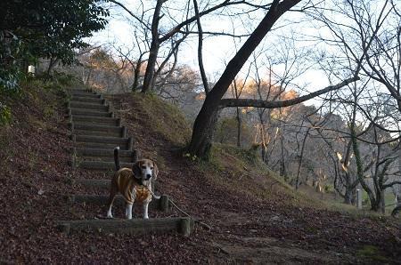20171214鶴舞公園08
