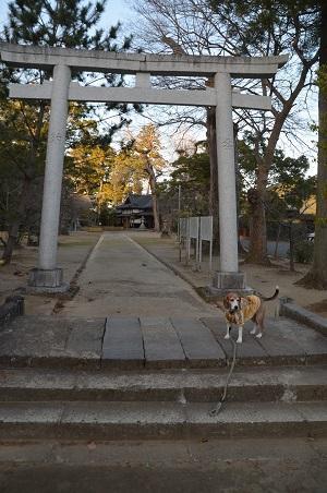 20171214橘樹神社04