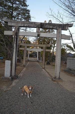 20171214橘樹神社03
