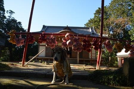 20171214春日神社11