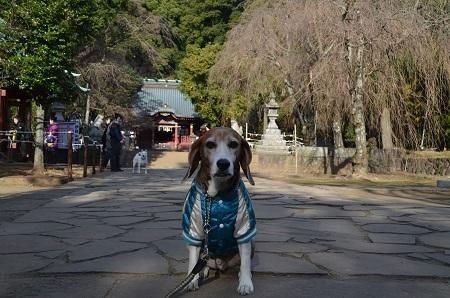 20171218伊豆山神社10