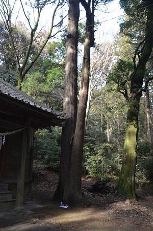 20180118佐志能神社 村上15