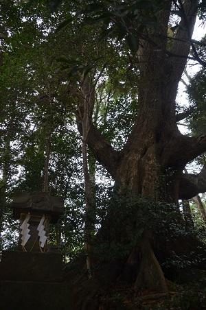 20180122宗像神社17