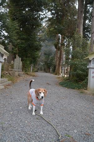 20180216五所駒瀧神社05