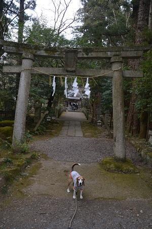 20180216五所駒瀧神社09