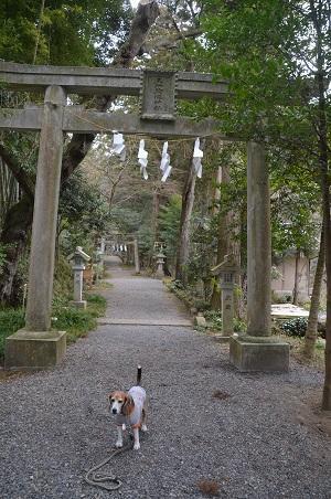 20180216五所駒瀧神社07