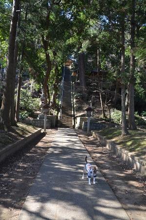 20180219諏訪神社05