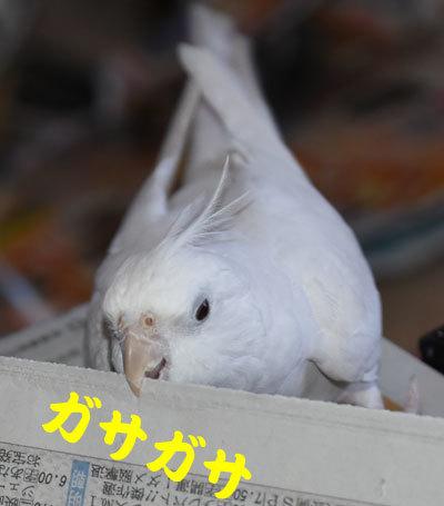 2_アンジュ