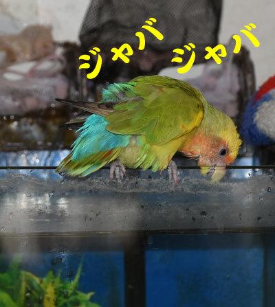 2_水浴び