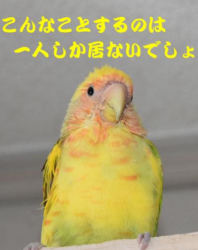 6_たれこみ