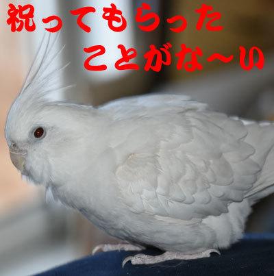 4_アンジュ