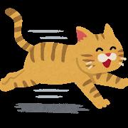 ネコ(走る