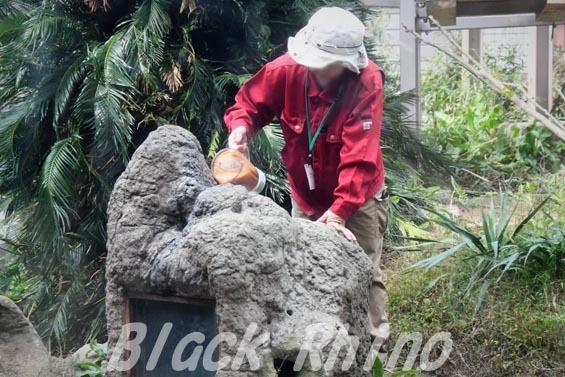 ニシチンパンジー ジュース充填 到津の森公園