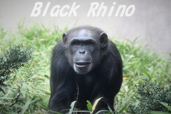 ニシチンパンジー クララ01 到津の森公園