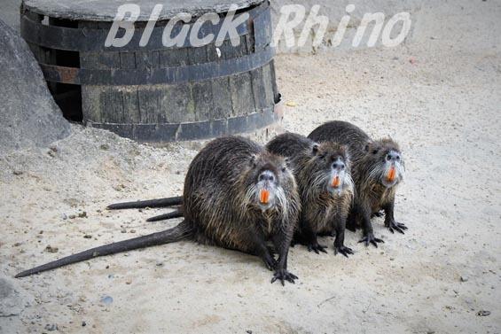 ヌートリア2 天王寺動物園