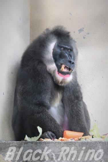 ドリル4 天王寺動物園