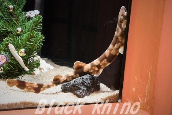 トラザメ ヨコハマおもしろ水族館