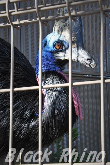 ヒクイドリ 東武動物公園