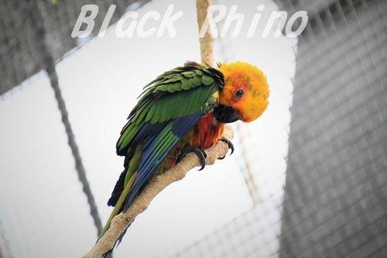 ナナイロメキシコインコ2 掛川花鳥園