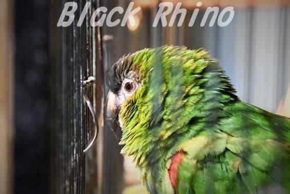 コミドリコンゴウインコ 上野動物園