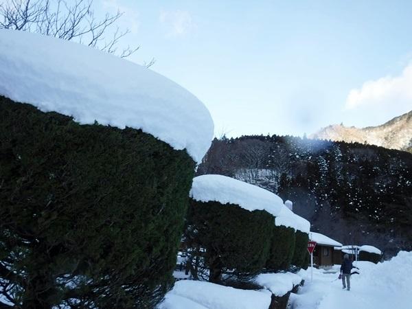 DSCF1798雪