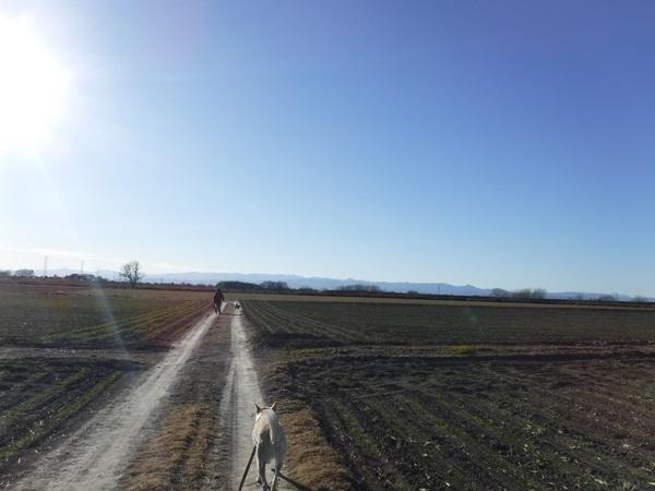 DSCF1823散歩