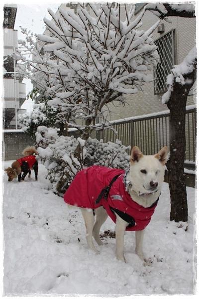 004大雪