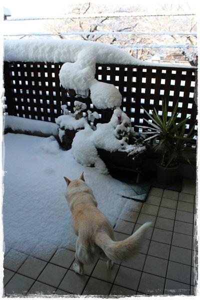 001大雪