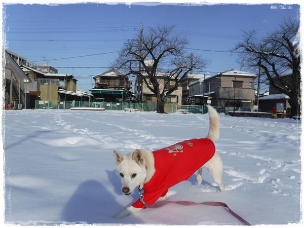 DSCF1843大雪