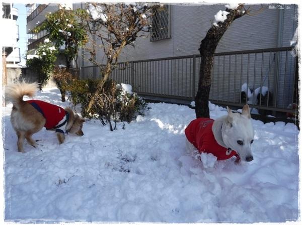 DSCF1847大雪