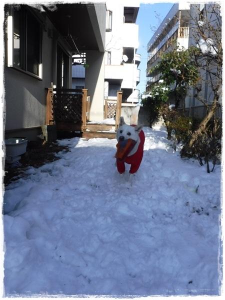 DSCF1857大雪