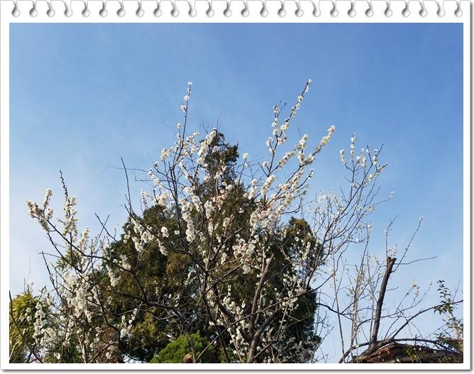 もうすぐ桜1-4