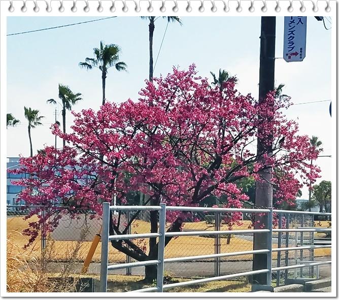 もうすぐ桜1-5