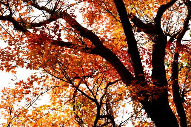 遅い秋(1)