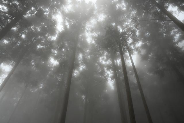 霧むせぶ山(3)