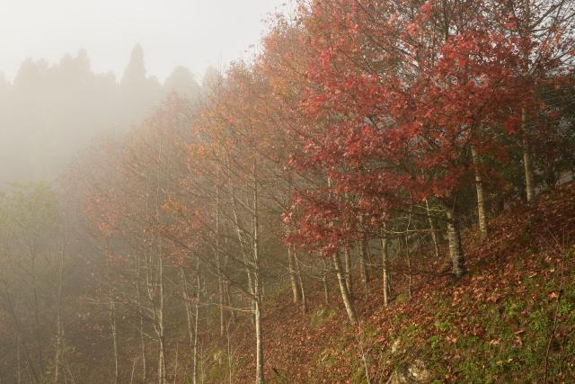 霧むせぶ山(1)