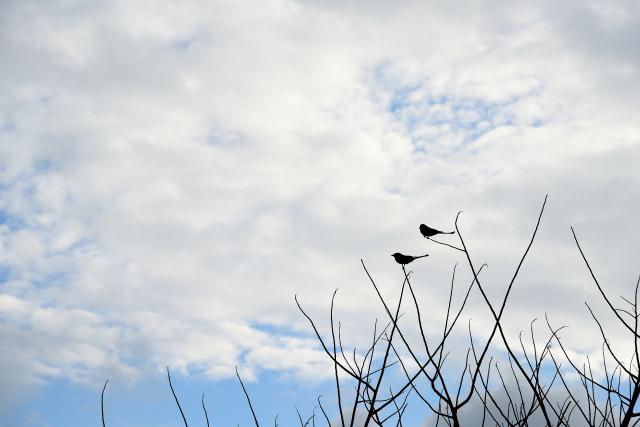 見上げた空(1)