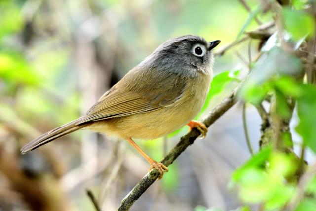 森林の野鳥たち(5)